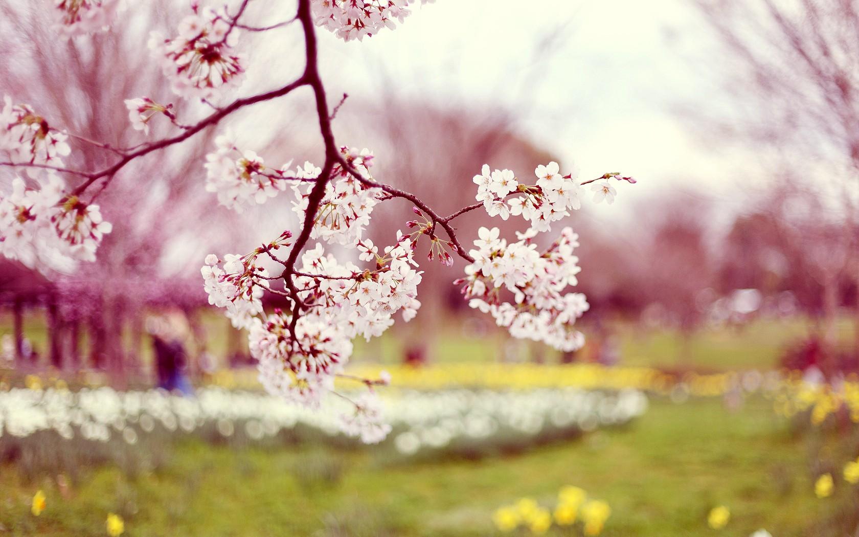 Flowers-spring-37265726-1680-1050